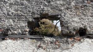 Postupným zväčšovaním dier po stropných trámoch je ohrozené celé murivo