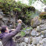 A tiež ostrihať bujnú šticu na hradbách